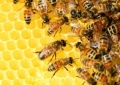 Онлайн-семінар з бджільництва